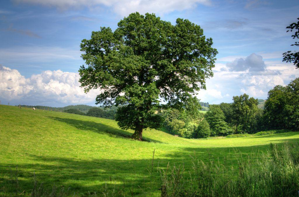 Kearney NE Tree Services